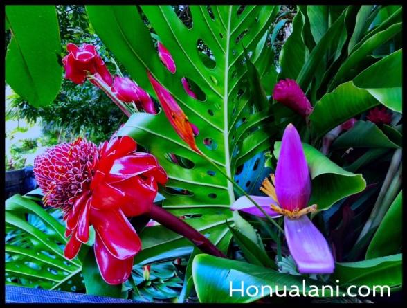 Honualani.com iWatermark